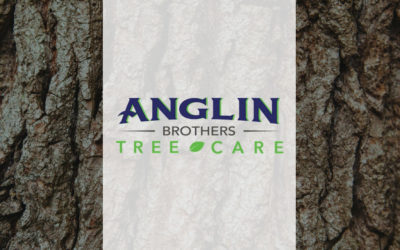 Anglin Brothers Tree Care in Lakeland
