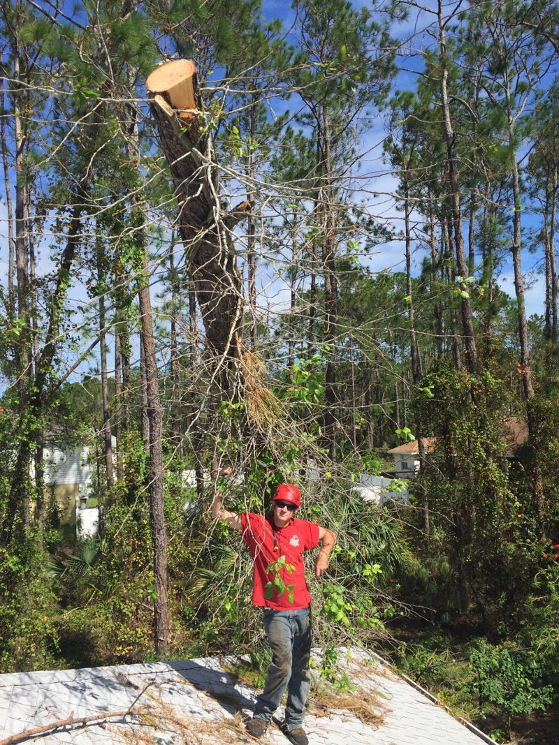 Anglin Brothers Tree Care in Lakeland - Spark My Site
